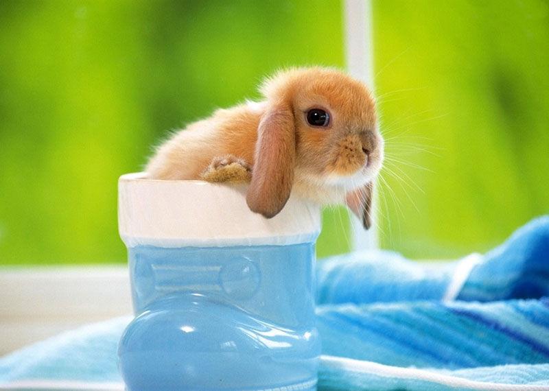 护眼可爱动物图片