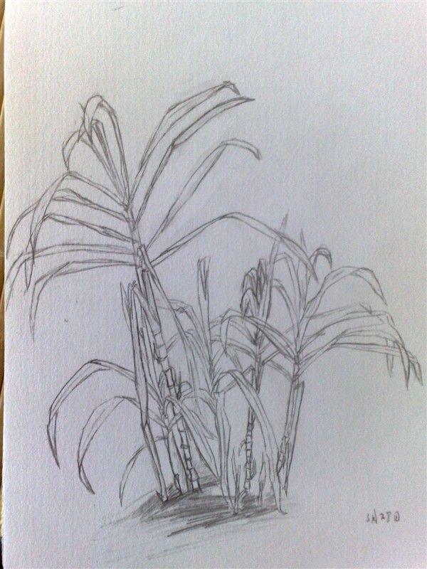 莲花素描简笔画步骤