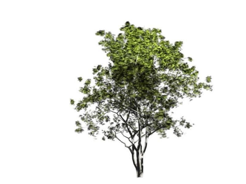景观手绘立面树 手绘树