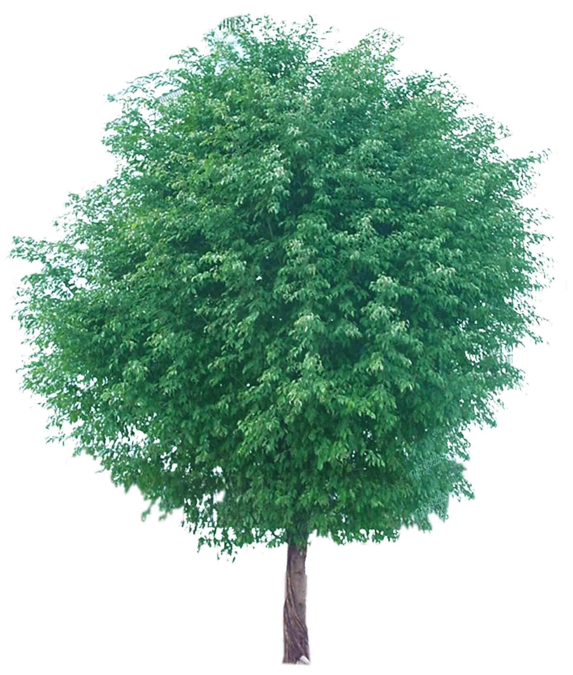 ps手绘树木