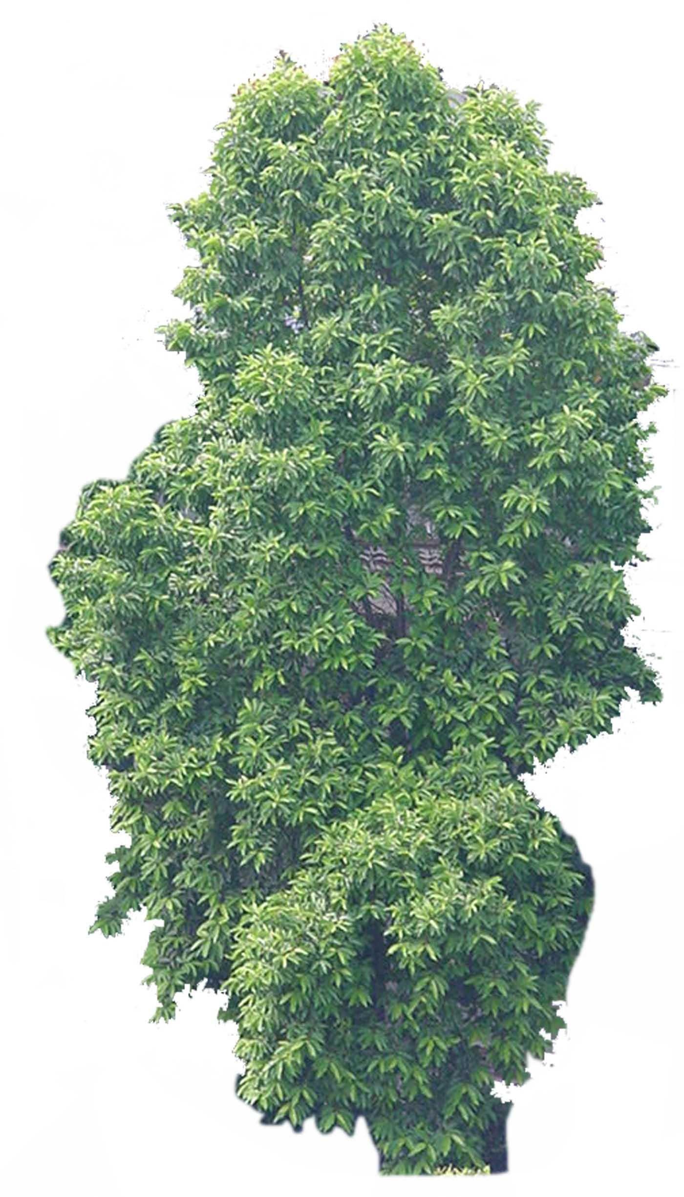 ps树木手绘