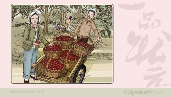 阜平大枣手绘插图2