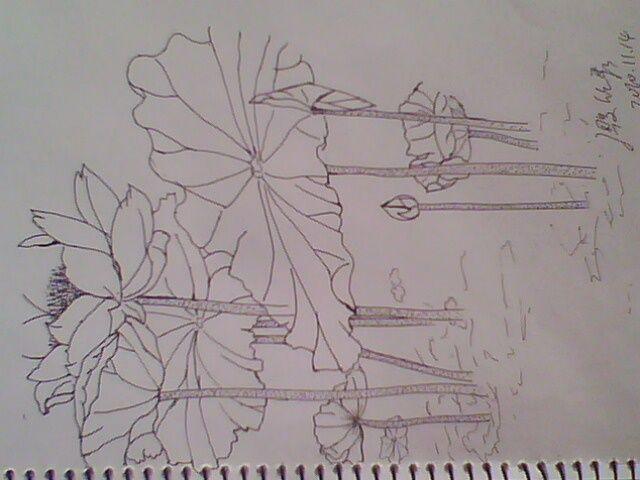 荷花铅笔画步骤图解