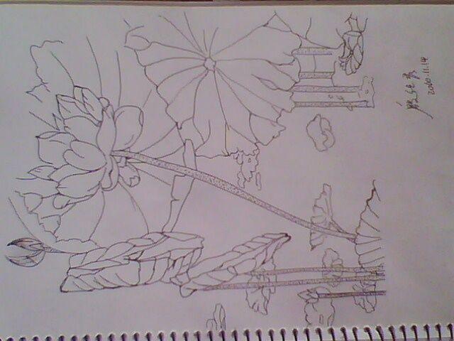 手绘 白描 荷花; 手绘,白描 荷花案例图片-白描-手绘; 铅笔画荷花的