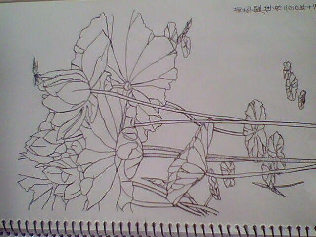 国画荷花工笔白描高清,工笔白描牡丹图片,中国工笔白描人物画