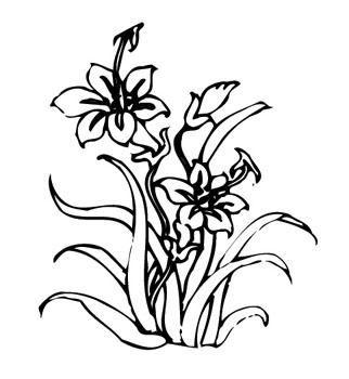 简单手绘花朵图片铅笔画