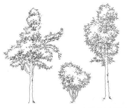 庐山艺术特训营植物单体