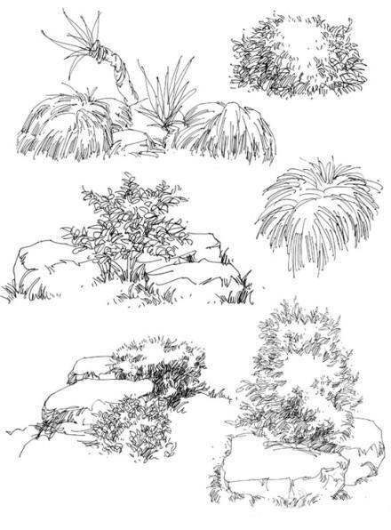 庐山艺术特训营植物单体图片