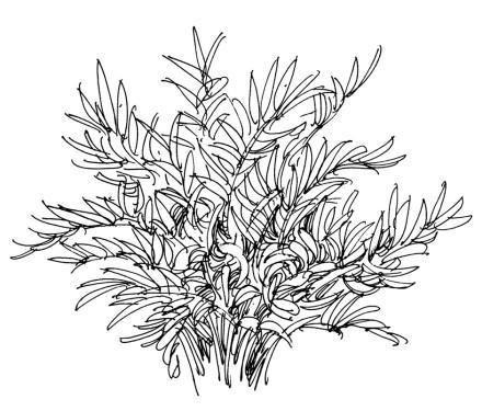庐山艺术特训营植物单体-手绘-设计案例 - 庐山艺术特