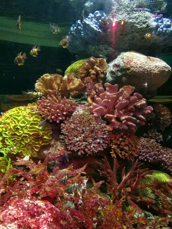 各色珊瑚 水生植物