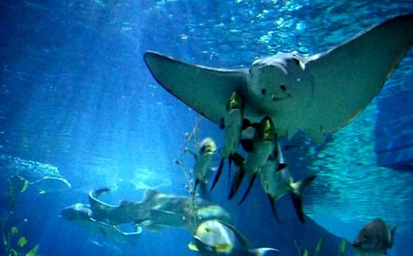 在海底世界里面的微笑天使