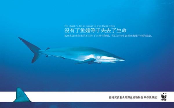 保護動物海報