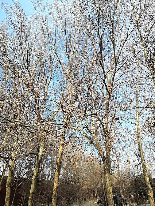 一片光秃秃的树林