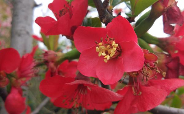 春天盛開的花