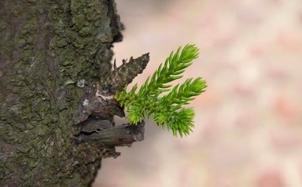做一颗不被生活压倒的松树