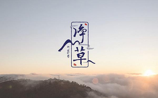 塔望 | 青海【净草】品牌策划创意