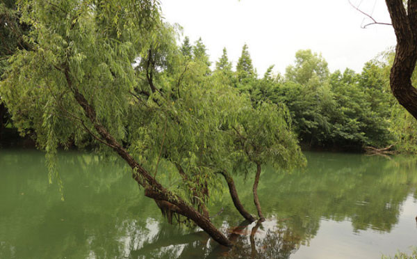 湖水水中树