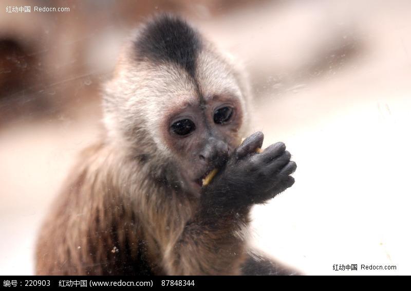 吃东西的小猴子图片,高清大图