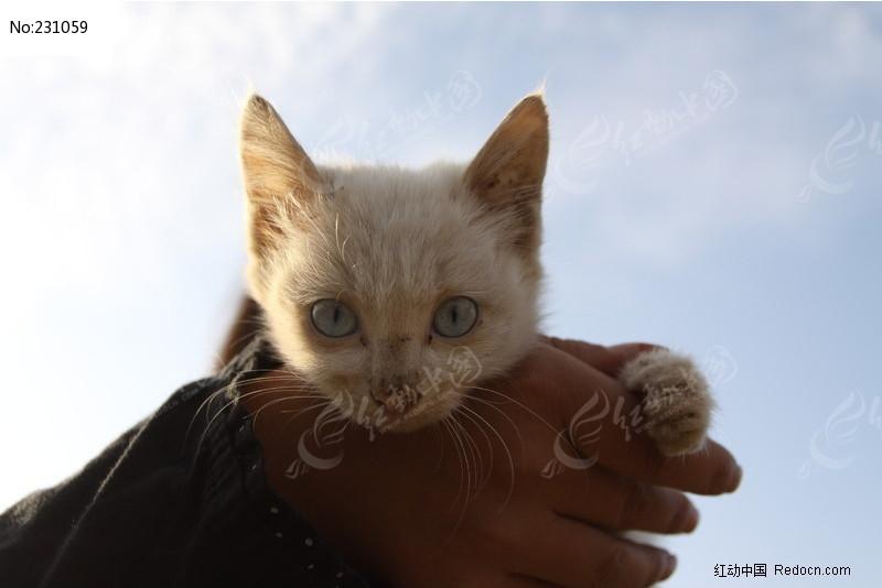 小猫咪特写图片素材下载(编号:231059)