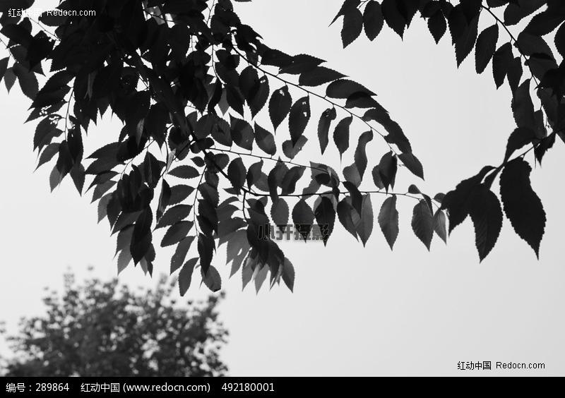 叶子图片_动物植物图片