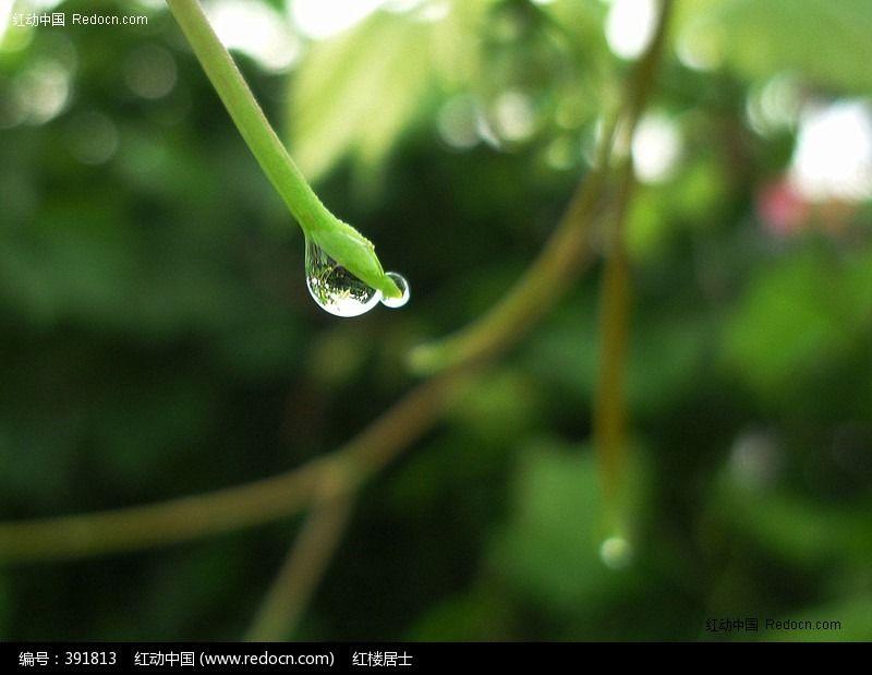 露珠图片_动物植物图片
