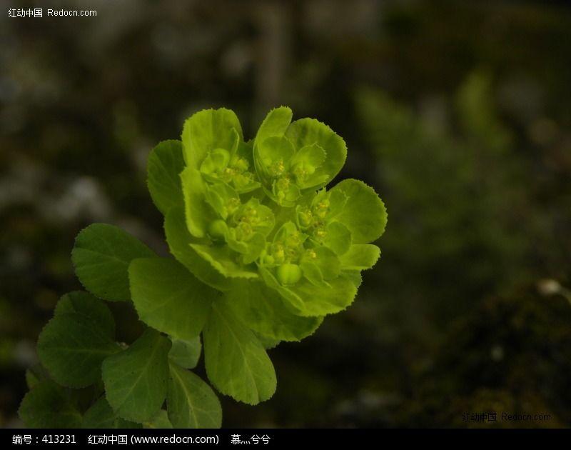 原创摄影图 动物植物 花卉花草 绿色花朵  请您分享: 红动网提供花卉