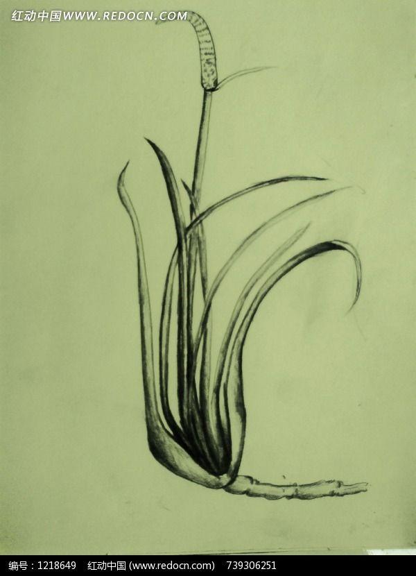 怀旧风格的手绘芦苇图片,高清大图_插画绘画素材