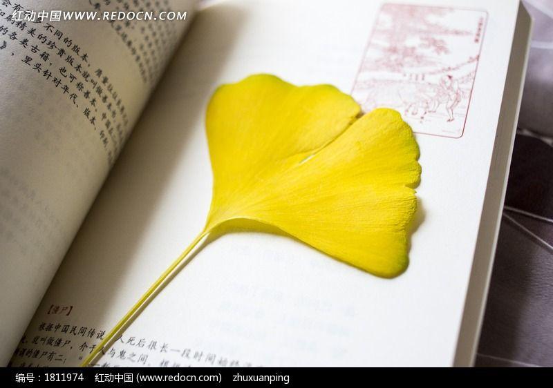 黄色片和动物干_原创摄影图 动物植物 树木枝叶 一片黄色银杏叶