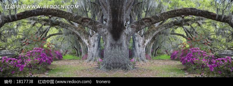 古老的大树图片,高清大图_森林树林素材