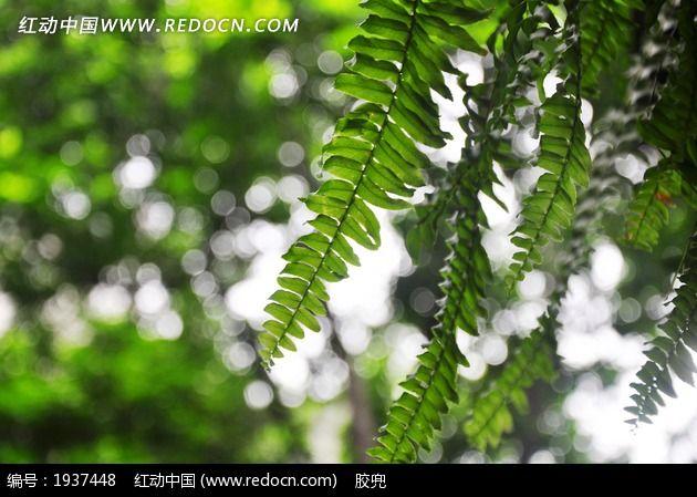 原创摄影图 动物植物 树木枝叶 小清新风景图片
