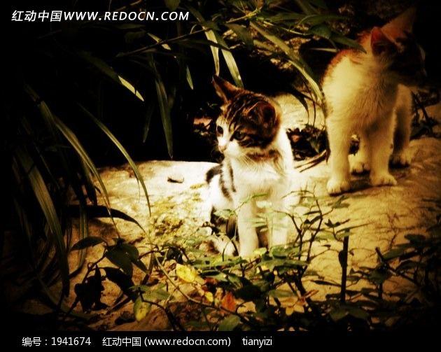 公园里的两只小猫咪摄影图片图片