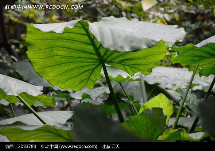 阳光下的绿色树叶图片,高清大图_树木枝叶素材