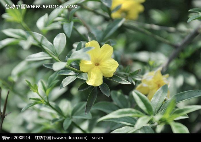 绿叶黄花图片_动物植物图片