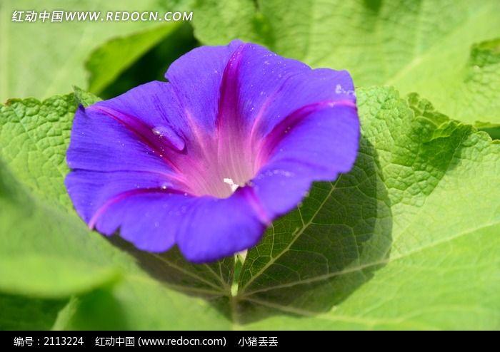 紫色幼儿园校服图片