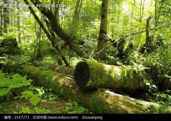 长白山原始森林风景图片