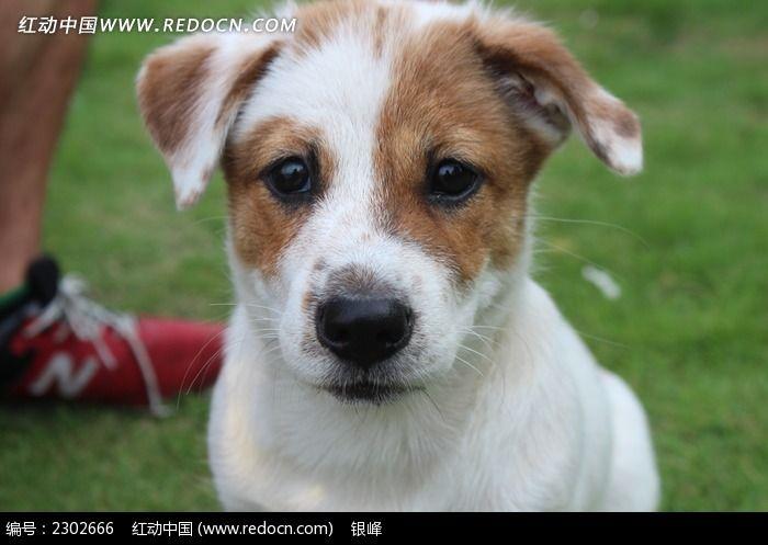 小狗头像特写图片_动物植物图片