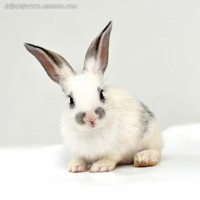 卖萌的小兔子