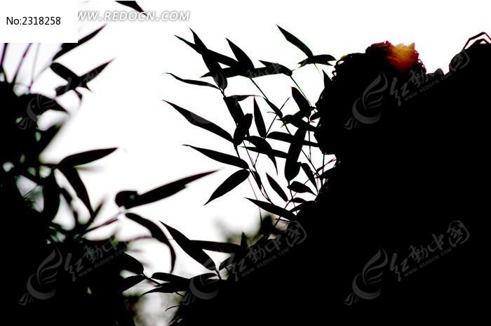 叶子剪影图片,高清大图_树木枝叶素材