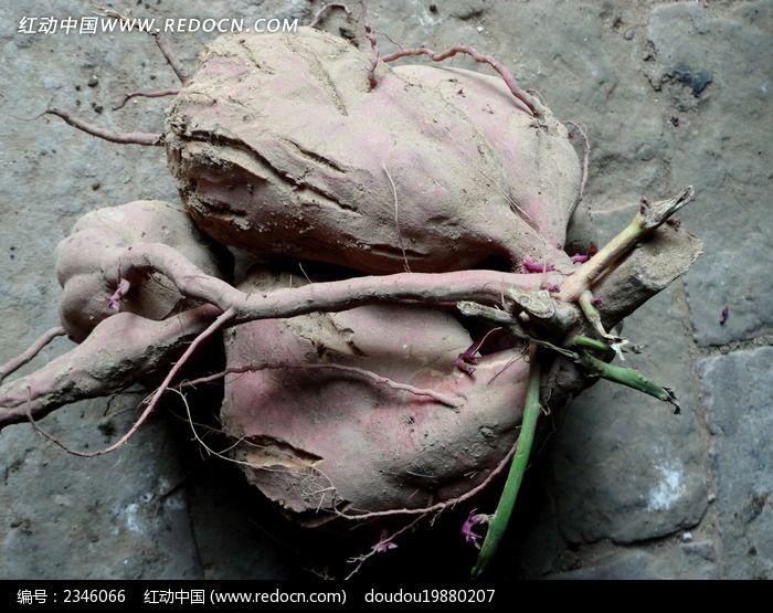 原创摄影图 动物植物 农作物 红薯
