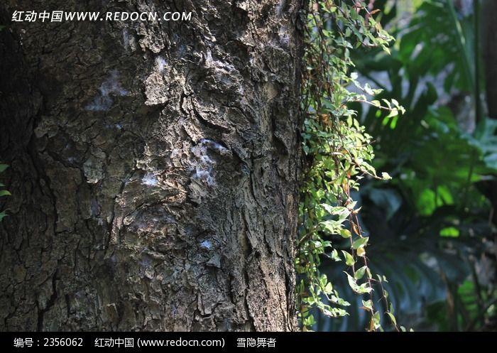 老树干纹理图片_背景素材图片