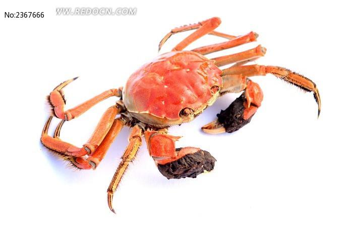 螃蟹高清摄影图片