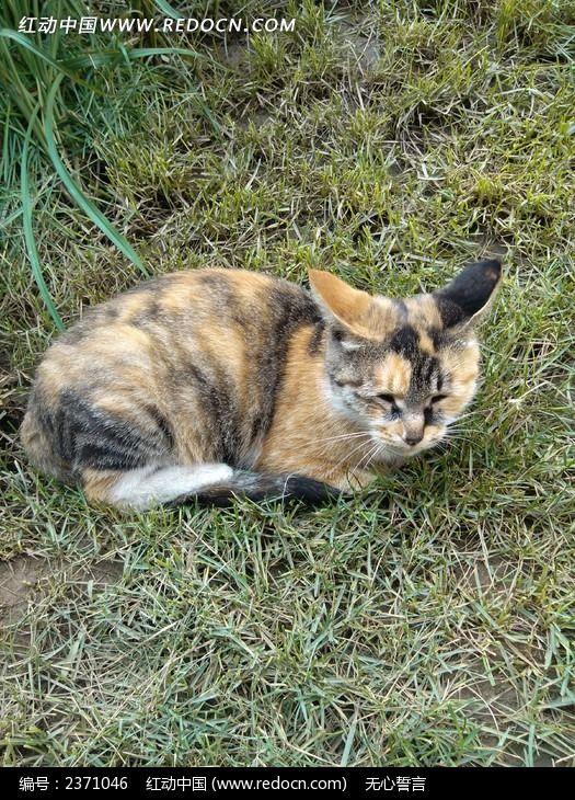伤心的猫图片,高清大图_陆地动物素材