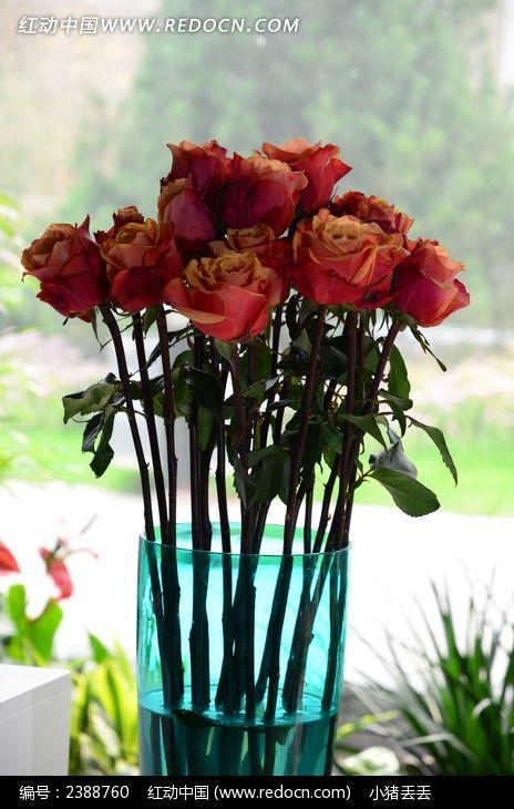 花瓶里盛开的玫瑰花图片