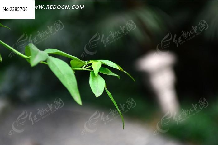绿色枝条图片,高清大图_树木枝叶素材