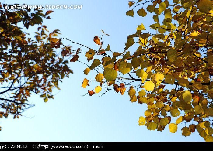 原创摄影图 动物植物 树木枝叶 秋叶树枝