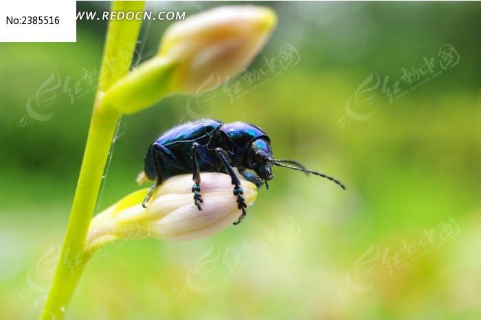 甲壳虫微距特写图片_动物植物图片
