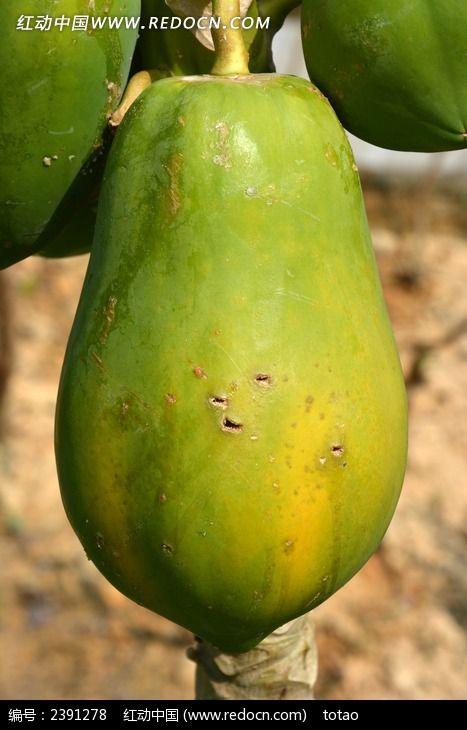 大木瓜图片,高清大图_农作物素材