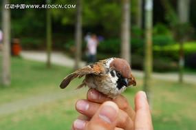 停在手上的小鸟