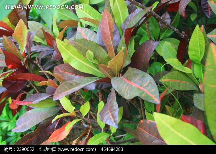 原创摄影图 动物植物 树木枝叶 彩色的树叶