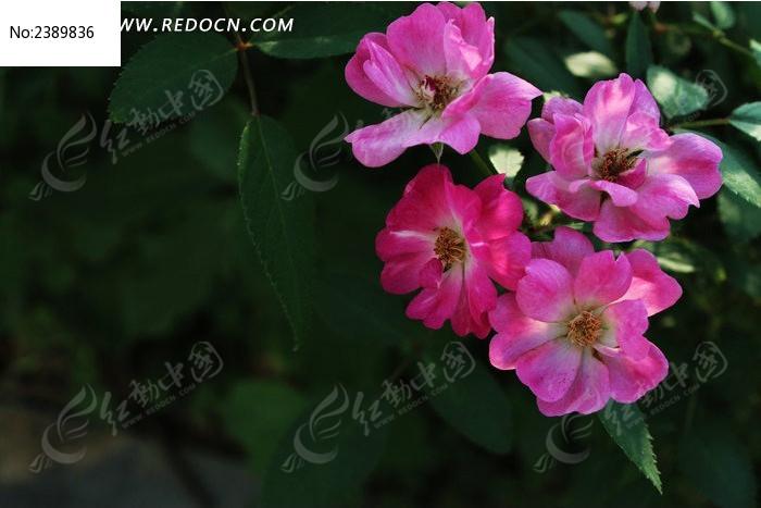 美丽的小花图片_动物植物图片